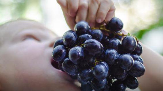 Ce qui survient dans votre corps quand vous commencez Voilà ce qui peut arriver dans votre corps si vous mangez des raisins tous les jours !