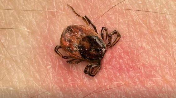 Alerte: un nouveau virus fait des ravages au Canada!