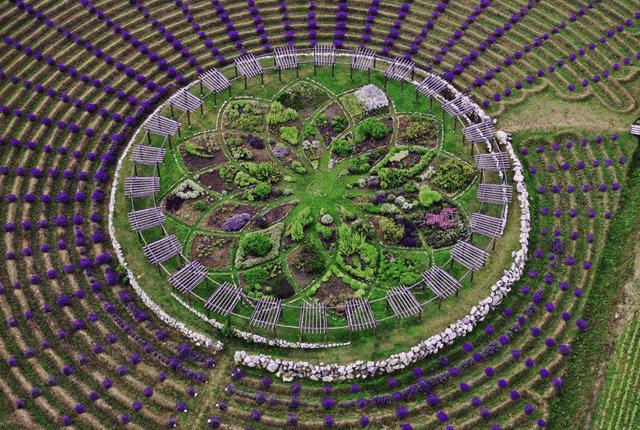 Ce labyrinthe de lavande va captiver tous vos sens : Apprenez à en cultiver chez vous …